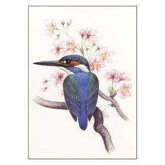 カワセミ ポストカード.jpg