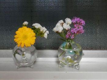 キッチンの花.JPG