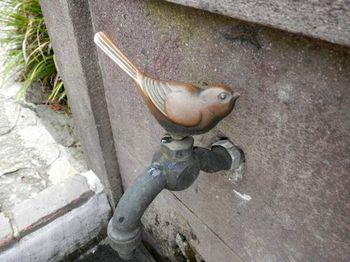 コトリの蛇口.JPG