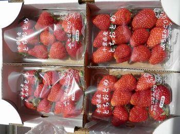 ジャム用イチゴ.JPG