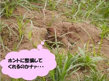 スズメ浴場.jpg