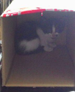 ダンボールのネコ.jpg