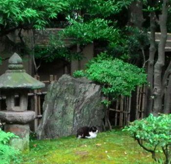 ニューオータニのネコ.jpg
