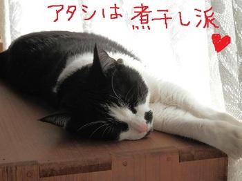 リンちゃん.JPG