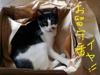 リンちゃん 箱.jpg