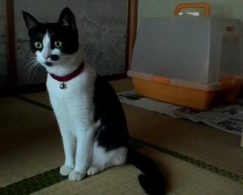 リンちゃんお泊り-500x403.jpg