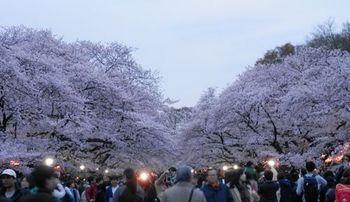 上野公園 お花見.JPG