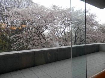 平成館からの桜.JPG