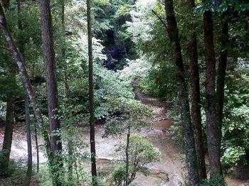 農溝の滝方面.JPG