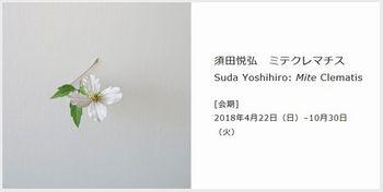 須田悦弘展覧会2018.jpg